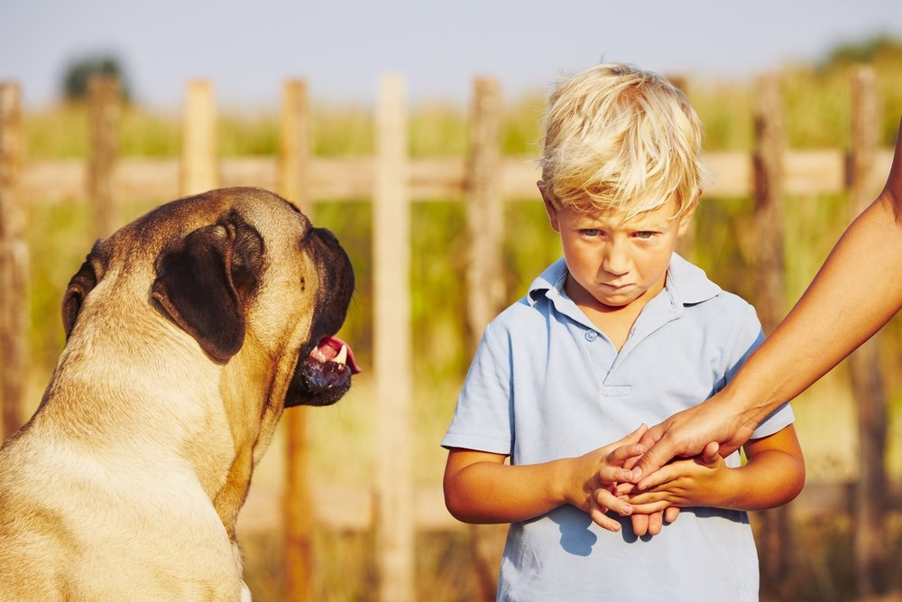 Help Je Kind Angst Voor Hond Te Overwinnen