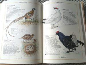 20180815_082847-225x300 Dom Montessori: Ilustrowany inwentarz ptaków. 76 gatunków ptaków z różnych stron świata. Zakamarki