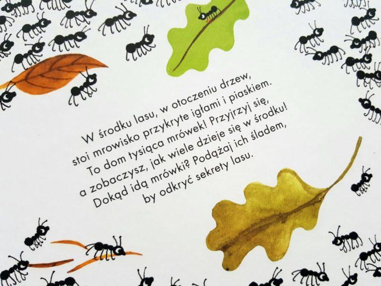 20190320_221606600417121-767x1024 Tysiąc i jedna mrówka – świat mrówek z bliska. Nasza Księgarnia