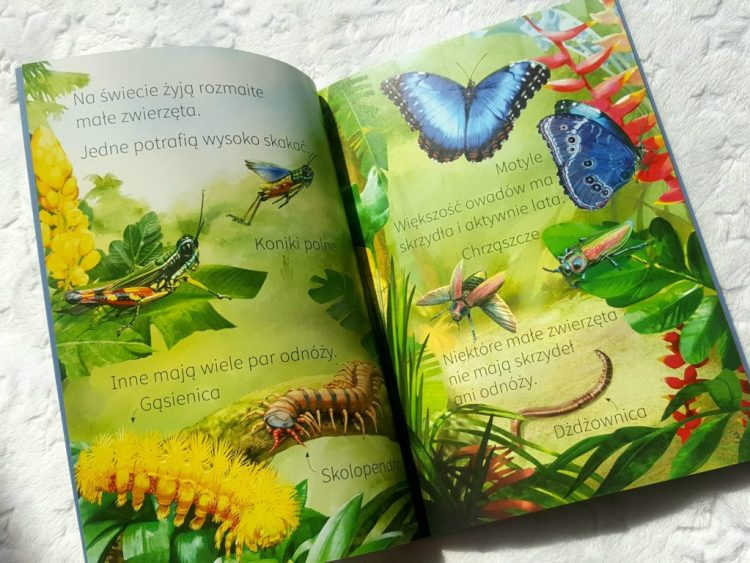 20190415_0942121626907402-1024x768 Dom Montessori: Mali przyrodnicy: Pory roku, dzieci zwierząt, owady oraz dinozaury 6-12+ Wilga