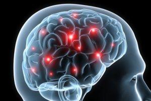 la plasticité du cerveau