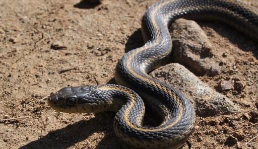 【夢占い】蛇が暗示する重要なシグナル