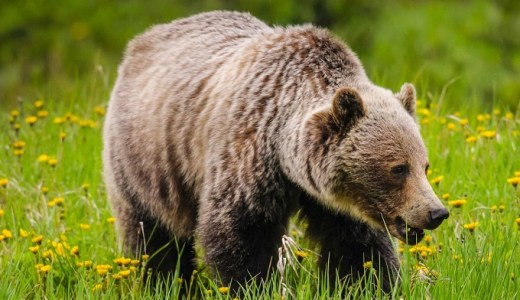 【夢占い】熊が暗示する重要なシグナル