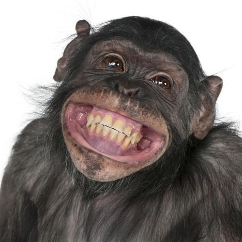 「猿」の画像検索結果