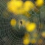 夢占い 蜘蛛