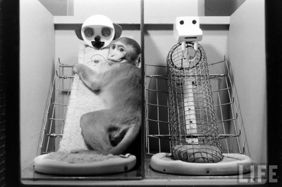 Harlow's Monkeys, Animal research into the Learning Theory of Attachment.