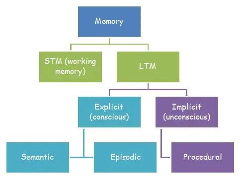 Long Term Memory Diagram