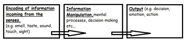 Diagram to illustrate the three components involved in the Information Processing Model.