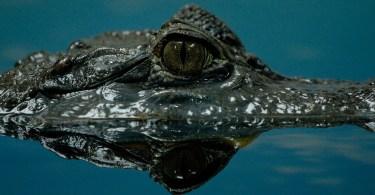 krokodyl i tsunami