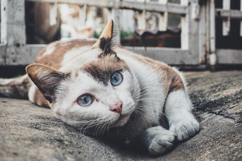dolegliwości kota