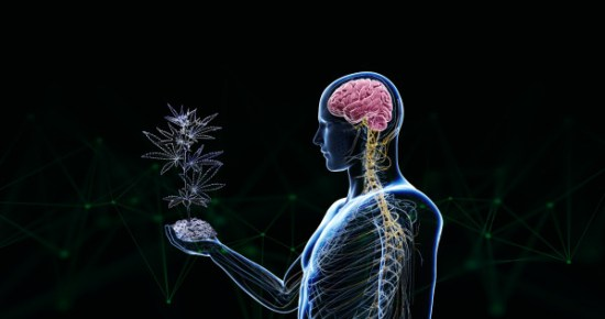 The truth about cannabis and your white matter - Sensi Seeds blog