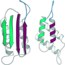 The normal process of protein folding can sometimes go awry, and prions can form (© AJC)