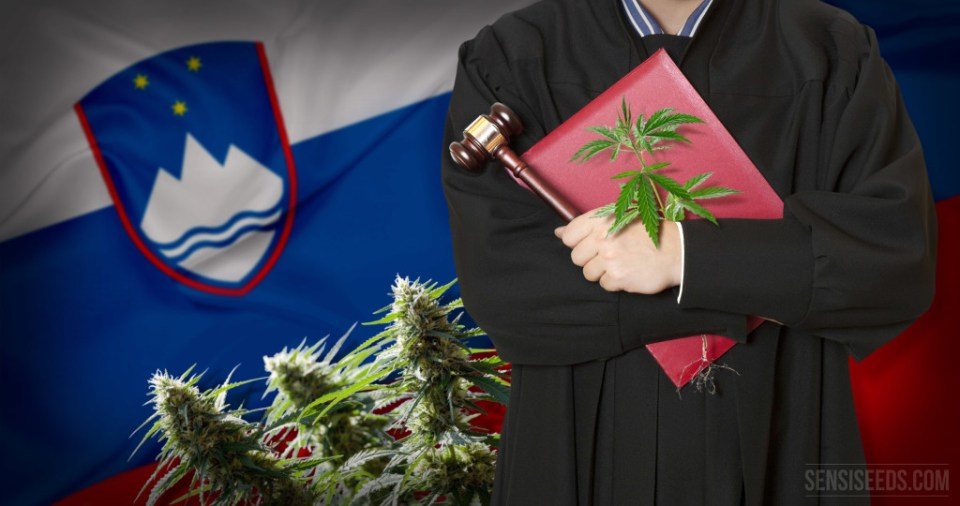 The legal status of cannabis in Slovenia - an overview - Sensi Seeds
