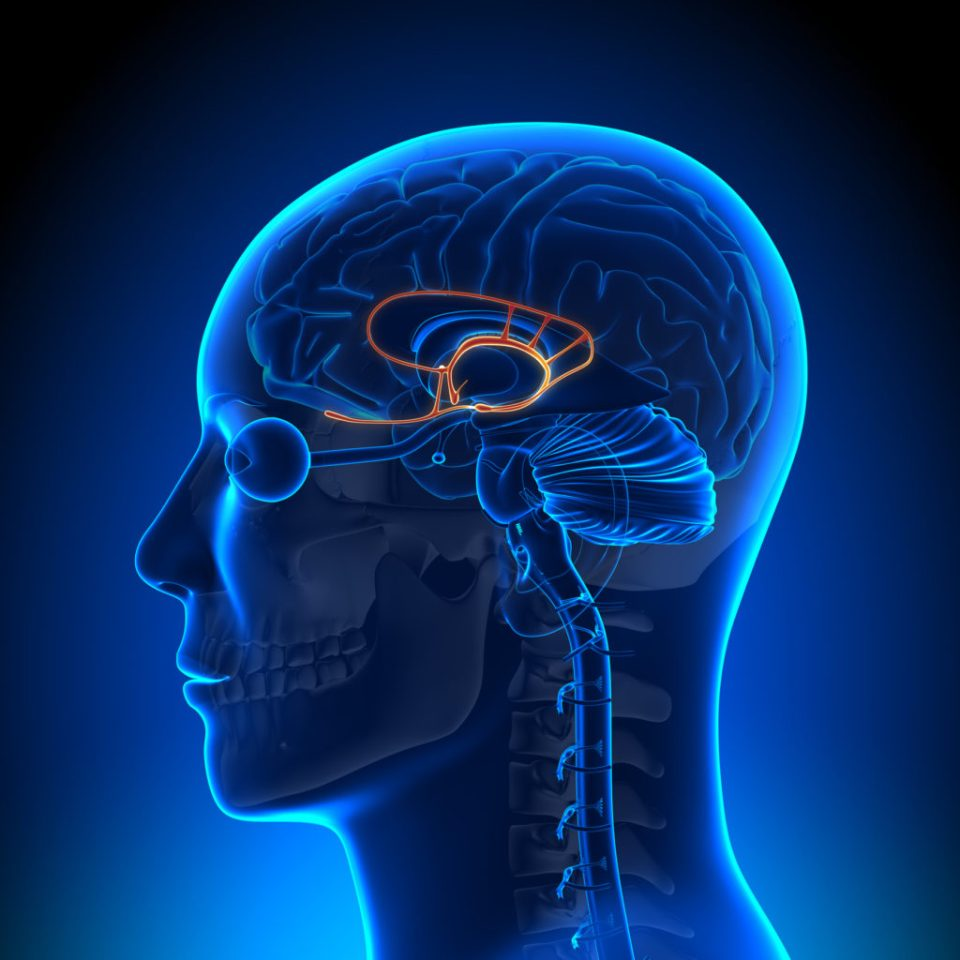 THC binds to CB?-receptors in the brain to cause the psychoactive effect (© Birth Into Being)
