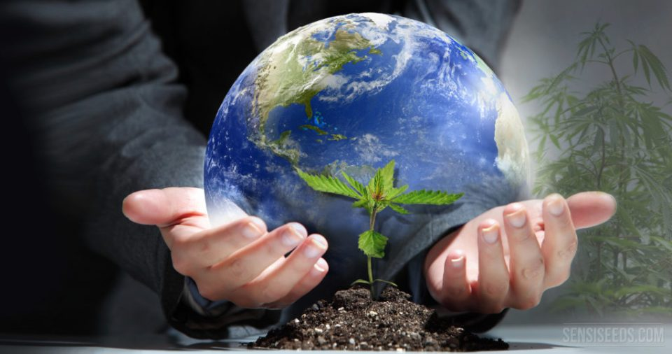 It's Time to Think Global and Grow Local! - Sensi Seeds Blog