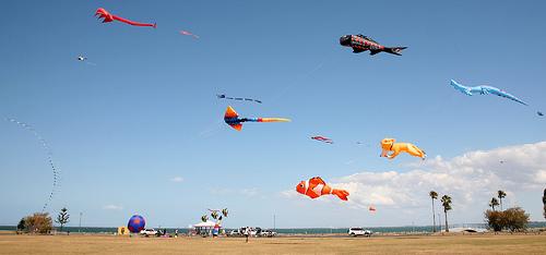kites photo