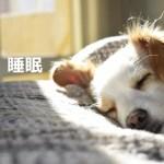 久々体感、質のよい睡眠におススメのサプリメント『ZMA』