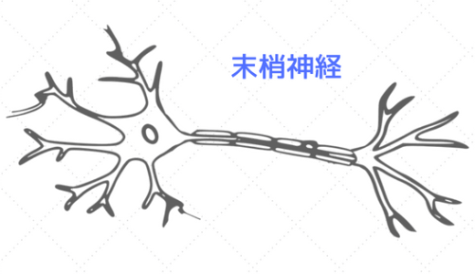 末梢神経 神経モビライゼーション