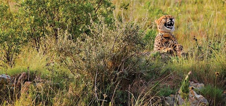 Vencedores do Prêmio de Fotografia Engraçada da Vida Selvagem de 2016