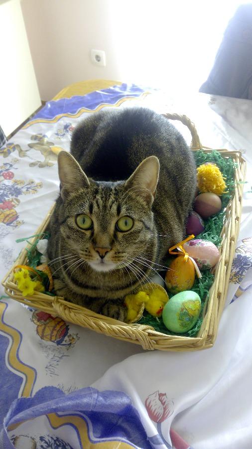 Animais vestidos de coelhos da Páscoa
