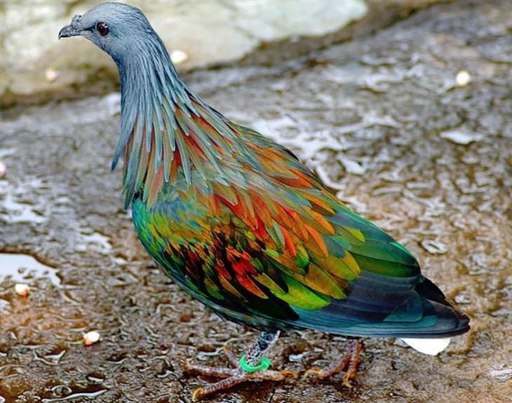 animais exóticos coloridos