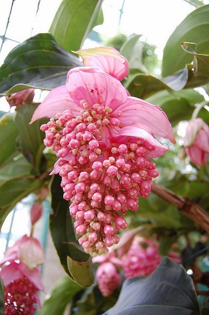 Belíssimas Flores Exóticas