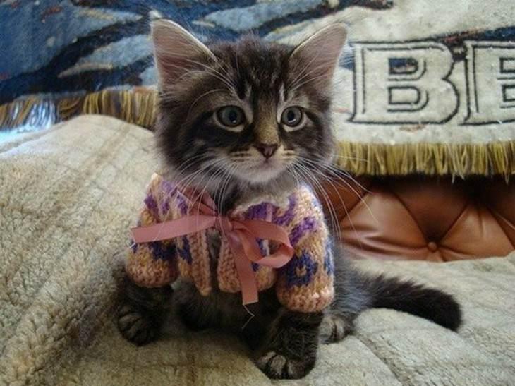 30 gatos fotografados vestidos