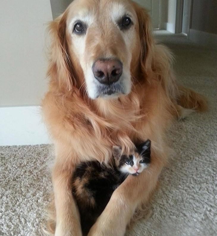 20 gatos fofos com seus parceiros!