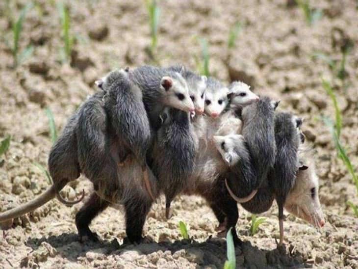 Os Mais Belos Retratos de Família de Animais