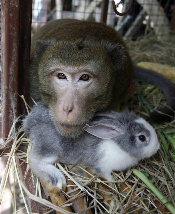 animais diferentes sendo amigos