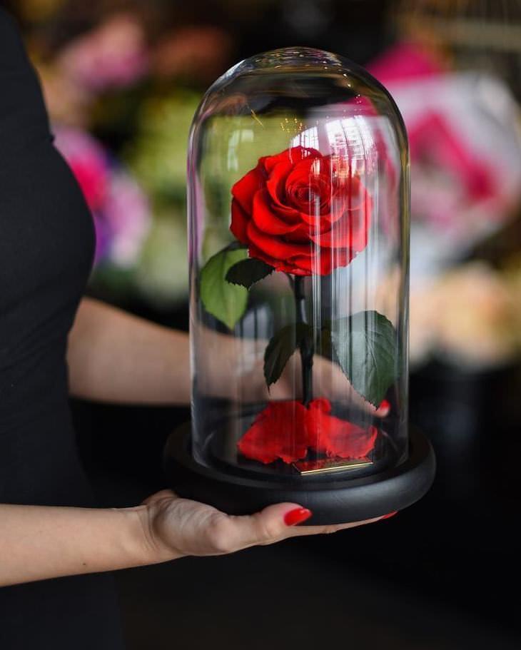 Essas lindas rosas duram mais de 3 anos
