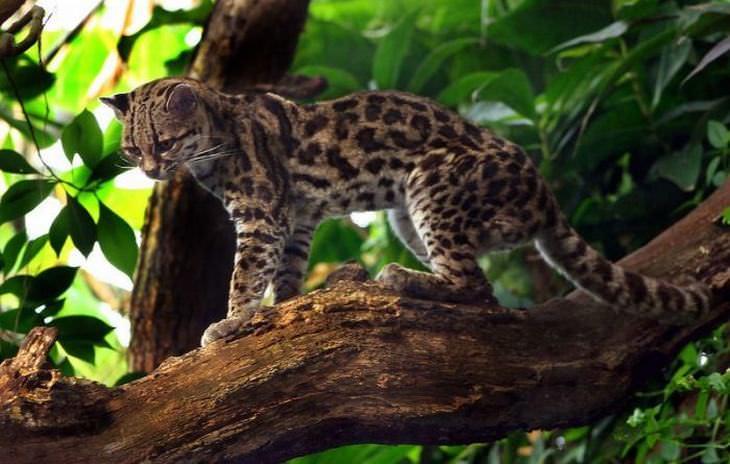 A vida na floresta Amazônica