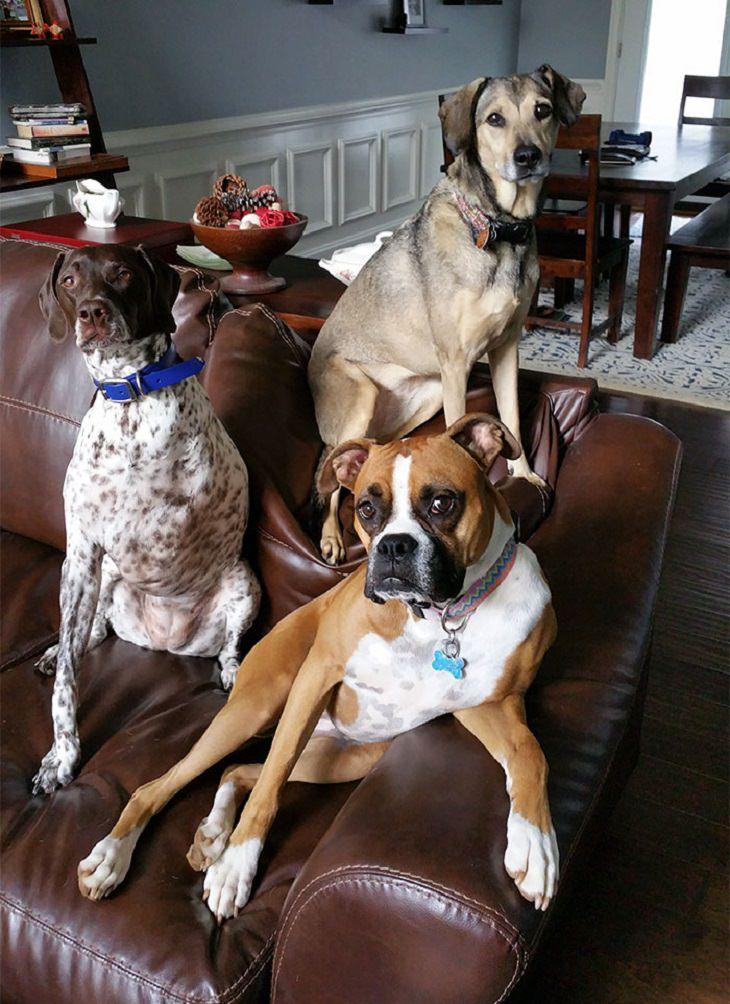 Fotos que mostram como é a vida com mais de um cão