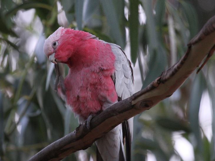 Os 10 Papagaios mais lindos do mundo