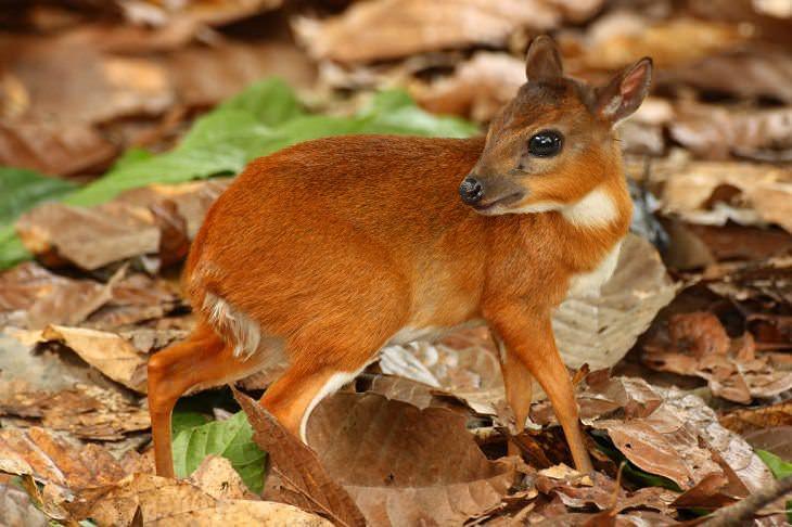 os 15 menores animais do mundo