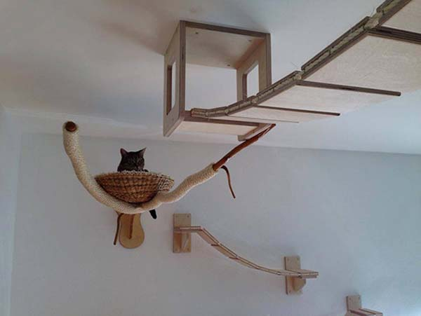 paraíso dos gatos