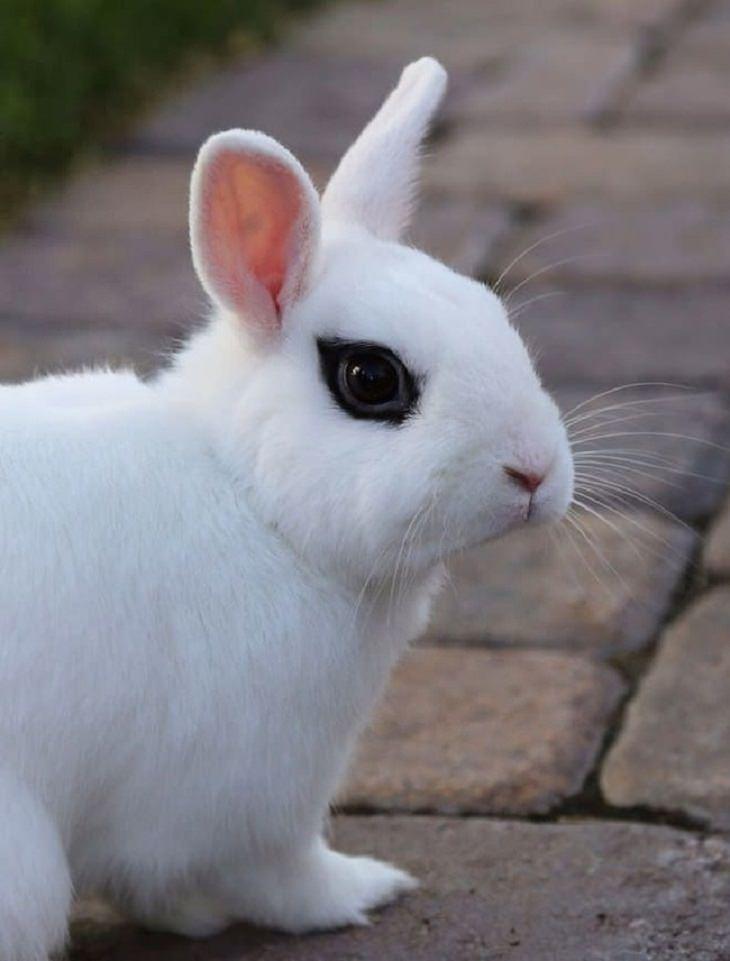 mutações genéticas em animais