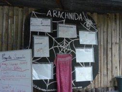 Sobre as aranhas locais