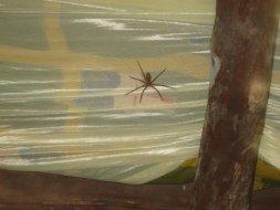 A aranha
