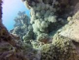 Peixe Escorpião