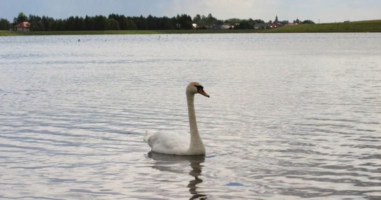 Zbiornik Rydzyna – nowa ostoja ptaków w Wielkopolsce