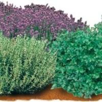 Once plantas medicinales para el jardín