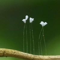 Flores extrañas: las más raras del mundo