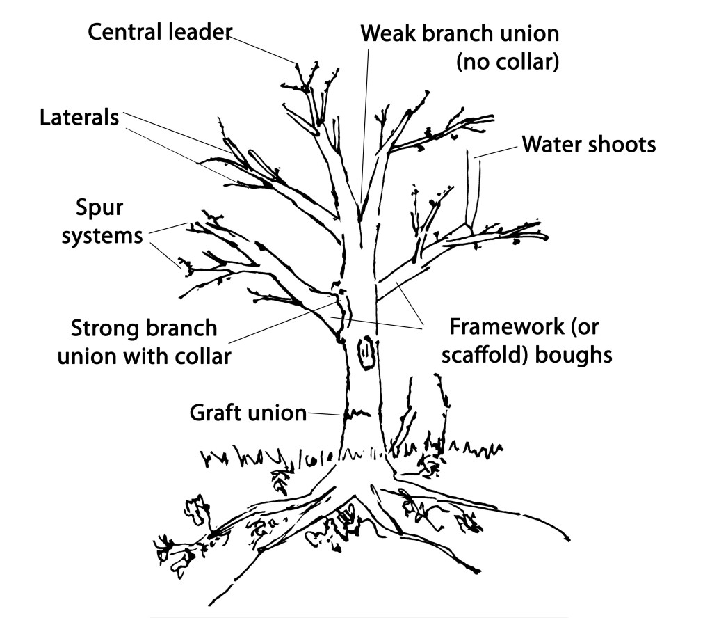 Parts Of A Tree Diagram Jerusalem House