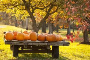 Luxuries in autumn