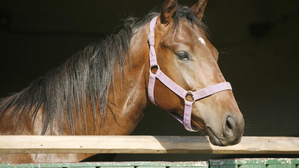 Horses have trusted companions; billionaires work the same way