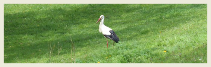 7th International White Stork Census has begun