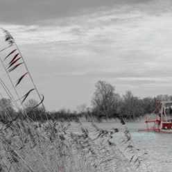 Bord de Charente