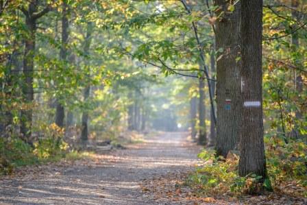 """""""Notre"""" forêt"""
