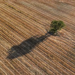 I am a poor lonesome tree